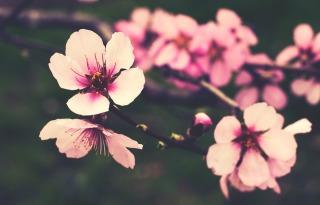 flower-827564_960_720